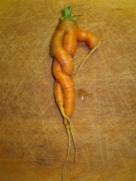 carotte s'enlace