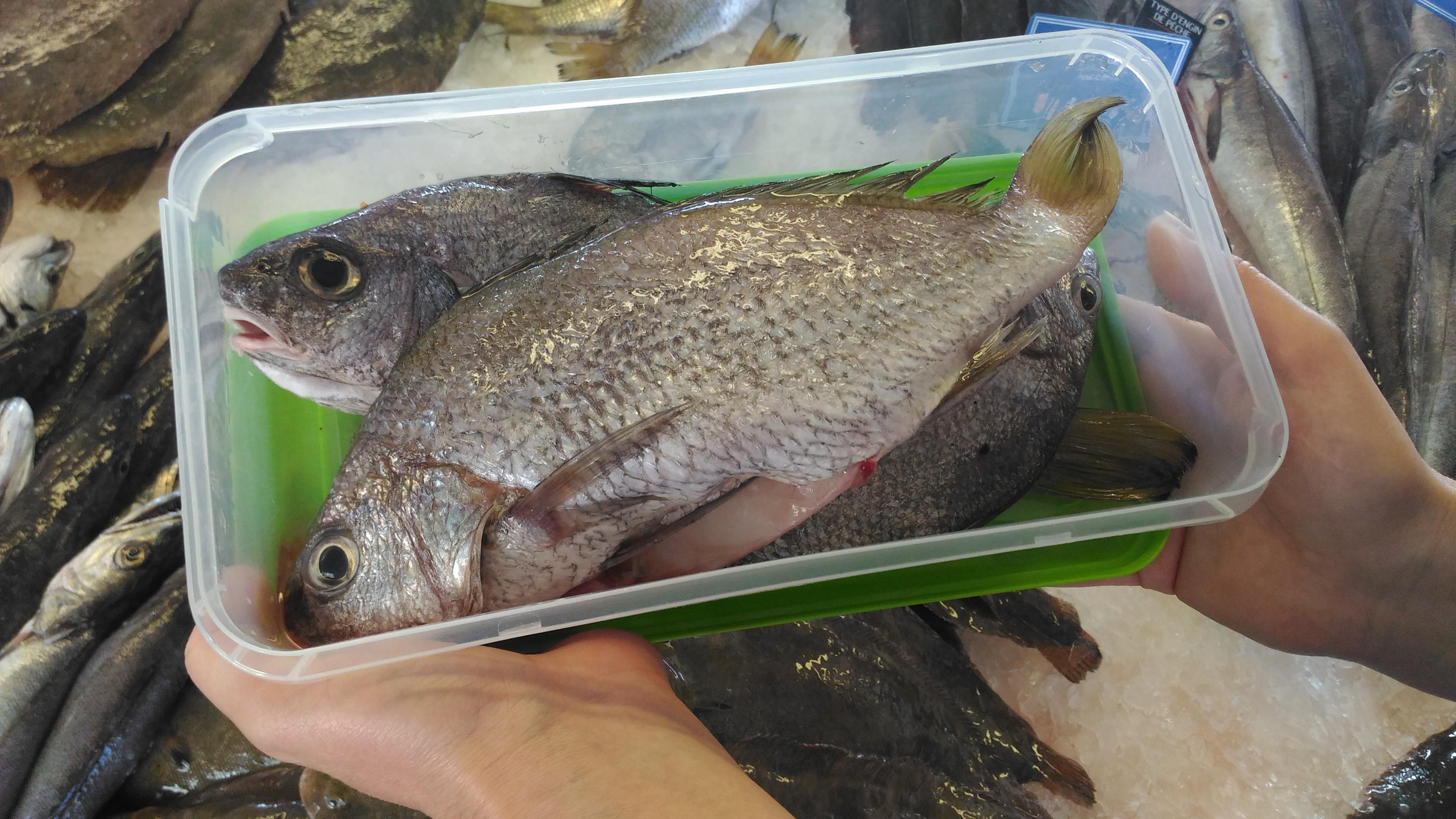 poissons tupp zéro déchet
