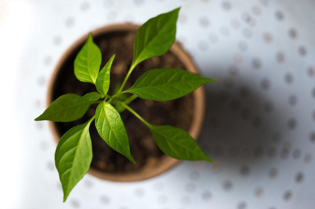 greenwashing, le végétal a la cote